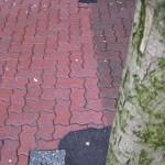 Brick Sidewalk 3