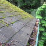 Roof & Gutters 1